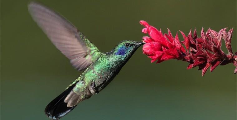 colibri-hummingbird.jpg